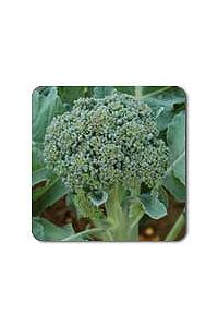 De Cicco Broccoli seeds - 1/32 oz