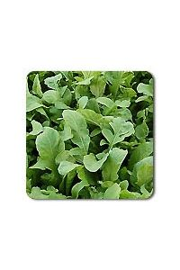 Astro Arugula seeds - 1/32 oz