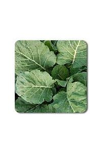 Champion Collards seeds - 1/32 oz