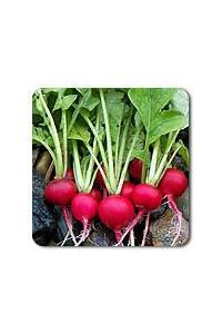 Cherry Belle Radish seeds - 1/16 oz