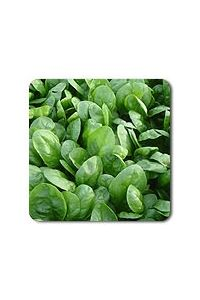 Corvair F1 Spinach seeds  - 100 seeds