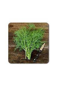 Bouquet Dill seeds - 1/32 oz